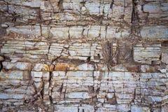 Devonian limestone Stock Images