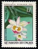 Devonianum del Dendrobium dell'orchidea, circa 1976 Fotografia Stock Libera da Diritti