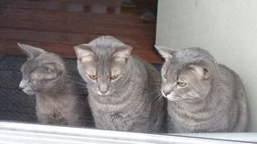Devono amare i gatti Immagini Stock