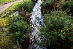 Devonport Leat, stara korytkowa przewożenie woda, Dartmoor Anglia Fotografia Royalty Free