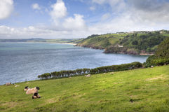 Devonshire coastline in Summer royalty free stock images