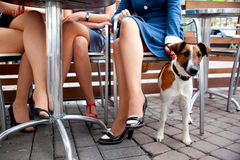 Devoted dog. Cute dog waiting his mistress while she's chatting with her friends Royalty Free Stock Photography