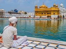 Devoto sikh no Harmandir Sahib, templo dourado Fotografia de Stock