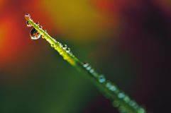 Dew 1 Stock Images