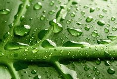 Dew Stock Images