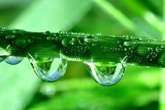 Dew Stock Image