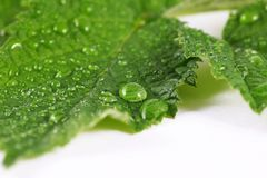 Dew Royalty Free Stock Photography