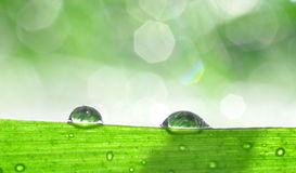 Dew Stock Photography