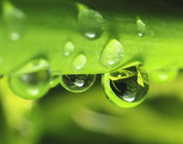 Dew 2 Royalty Free Stock Photo
