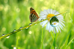 Free Dew And Butterfly Stock Photo - 14894910