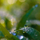 Dew beautiful bright. Focus clear dew drops on the grass in the morning stock photo