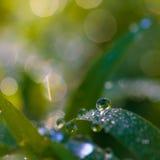 Dew beautiful bright. Stock Photo
