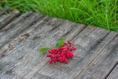 Dew on berries of wild barberry on wooden table. Berries in grass. Green grass. Wild berries. Uzbekistan Republic dish. Dew on berries of wild barberry on stock photography