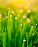 Dew on blades of grass Royalty Free Stock Photos