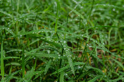 Dew of Blades of Grass Royalty Free Stock Photos