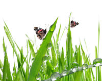 Dew and butterflies Royalty Free Stock Photography