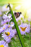 dew and butterflies Royalty Free Stock Image
