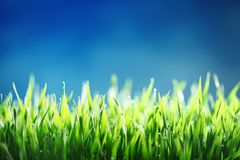 Green grass against blue sky background Stock Images