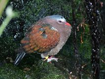 Dew covered pigeon Royalty Free Stock Photos