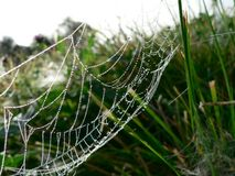 Dew Covered Spider Web 2 Royalty Free Stock Images