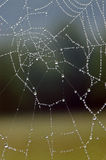 Dew Covered Spider Web Stock Images