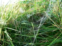 Dew Covered Spider Web 4 Stock Photography