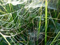 Dew Covered Spider Web Stock Image