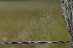 Dew Covered Spider Web on Fence. Barbed wire fence with spider web filled with dew droplets Stock Photo