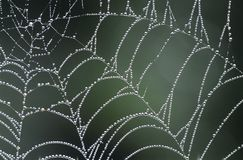 Dew covered spiders web Royalty Free Stock Image