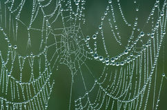 Dew Covered Spiderweb Royalty Free Stock Images