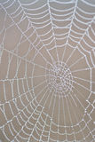 Dew covered spiderweb. With shallow depth of field Royalty Free Stock Photo