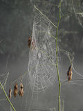 Dew Covered Spiderweb. A circular spider web is covered with morning dew Stock Photography