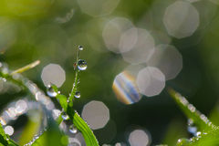 Dew in the day Royalty Free Stock Photos