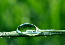 Dew drop. Fresh grass with dew drops close up Royalty Free Stock Images