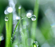 Dew drop Royalty Free Stock Photography