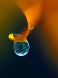 Dew drop Stock Photography