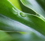Dew drop stock photo
