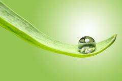 Dew drop Royalty Free Stock Photos