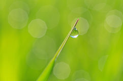 Dew drop on blade. Close up of dew drop on blade Stock Images