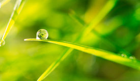 Dew drop on blade of grass Stock Photo