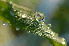 Dew-drop on the blade of grass Stock Image