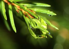 Dew drop on a branch Stock Photo