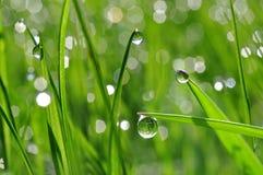 Dew drop closeup Royalty Free Stock Photography