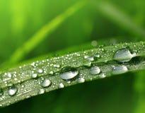 Dew drop closeup Royalty Free Stock Image