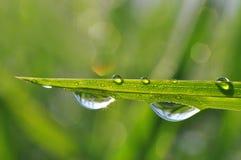 Dew drop Stock Images