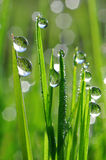 Dew drop Stock Photos