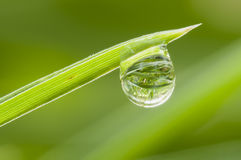 Dew drop on grass Royalty Free Stock Photo