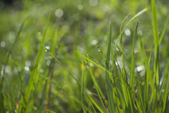 Dew drop on grass Stock Image