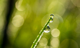 Dew Drop On Grass A. Shallow depth of field macro horizontal photography Stock Images
