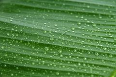 Dew drop Stock Image